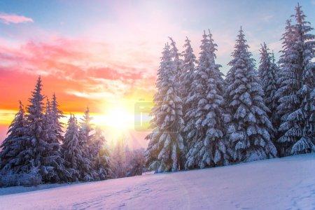 paesaggio invernale su un tramonto....