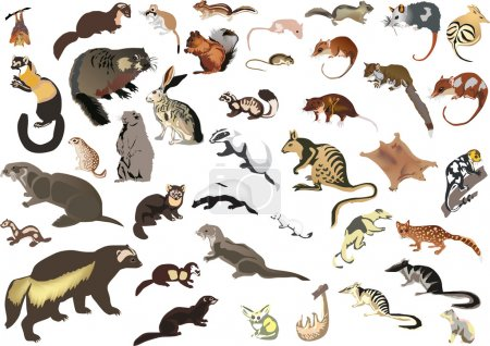 grande raccolta di piccoli animali