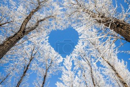 paesaggio invernale, rami formano u...