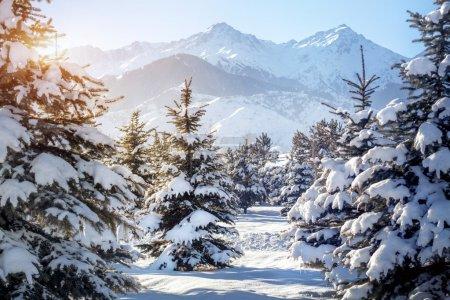paesaggio di montagna invernale
