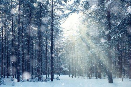 Bosco magico inverno