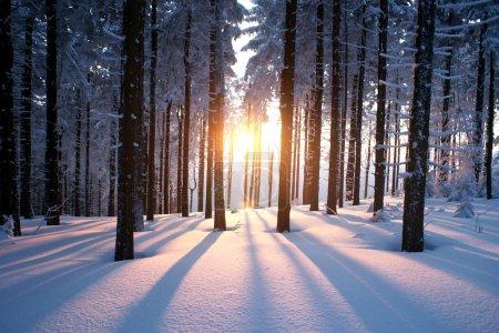 tramonto nel bosco in inverno