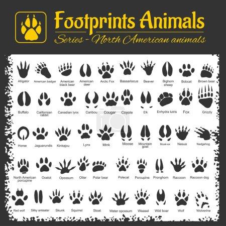 Tracce di animali - animali nordame...