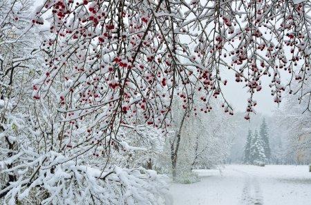 Nevicata a priorità bassa di inver...