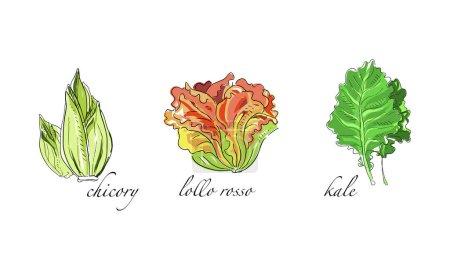 Set di insalate e verdure a foglia,...