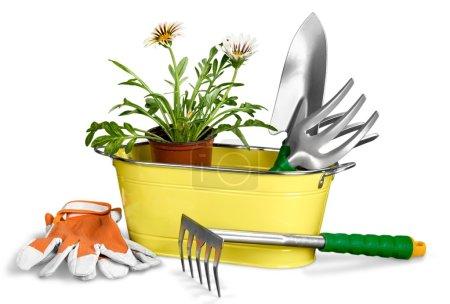 Ipastock fiori e giardinaggio attrezzature for Giardinaggio e fiori