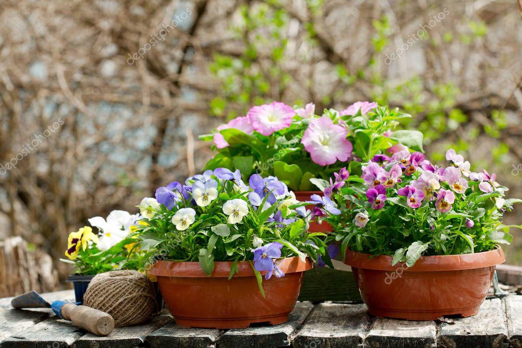 Ipastock attrezzi da giardinaggio e variopinti fiori del for Giardinaggio e fiori