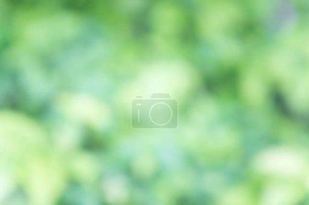Ipastock Texture Sfocatura Sfondo Colore Verde Natura