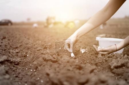 Ipastock mano del coltivatore della donna semina cipolle for Semina cipolle