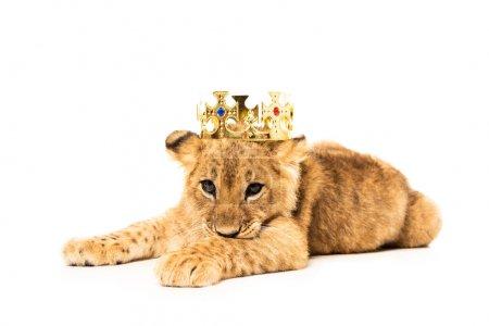 carino cucciolo di leone in corona ...