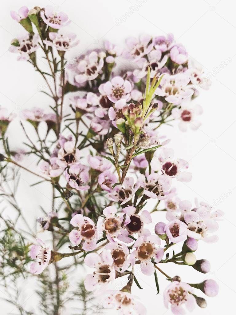 Ipastock ramo di eucalipto e fiori selvatici priorit for Immagini minimal