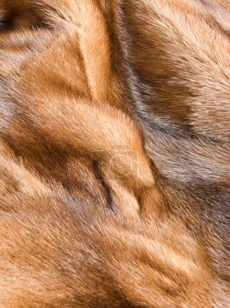 pelliccia di visone<br>
