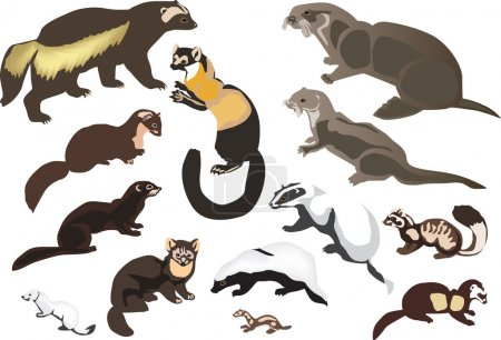 collezione di animali pelo isolato ...