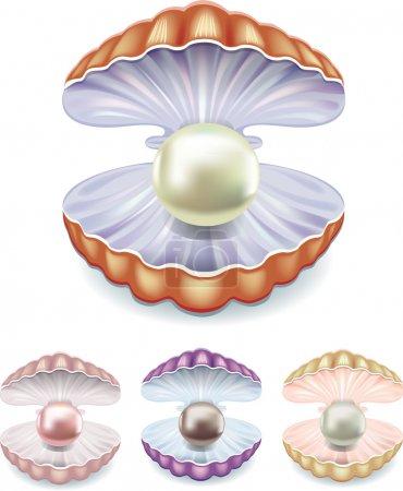 set di perle in gusci di colori div...