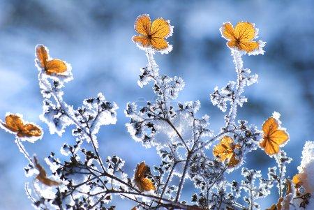 fiori d'inverno<br>